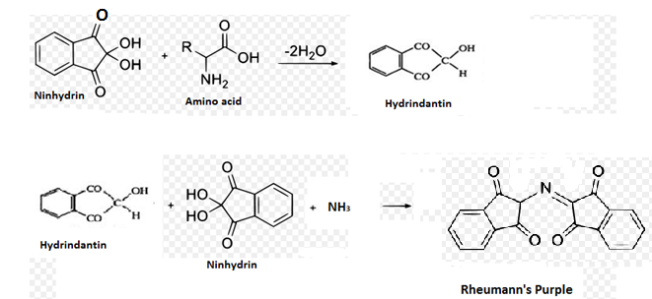 ninhydrin reaction